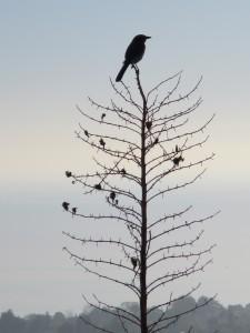 inspired bird